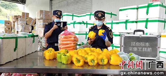 监管出口蔬菜。