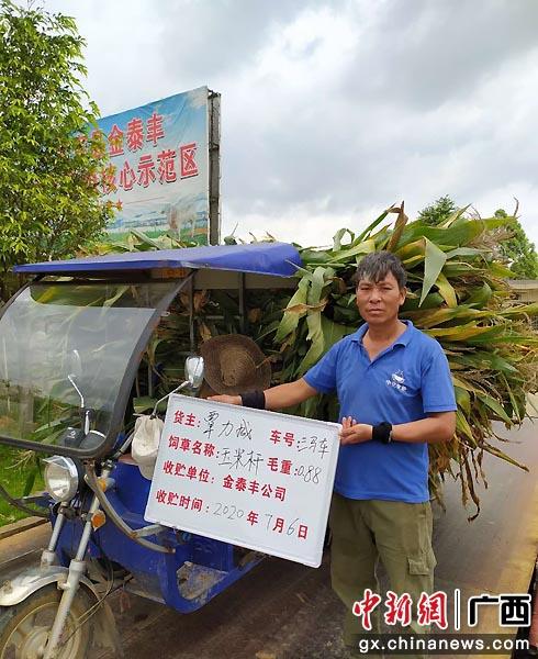 图为收购农户玉米杆。向国华 程宇瞰  摄影报道