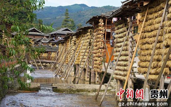 中国传统村落占里侗寨糯禾晾晒忙 秋景如画