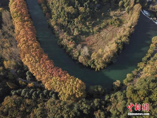 """航拍貴陽花溪河畔""""黃金大道""""秋色美"""