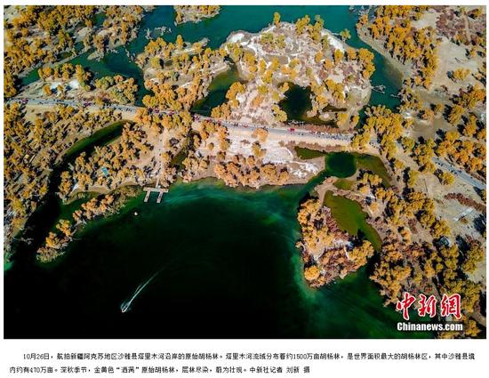 新疆千年胡杨迎来最佳观赏季