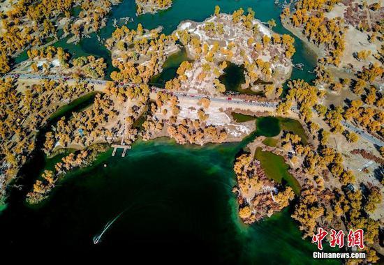 新疆塔里木河流域原始胡楊林層林盡染