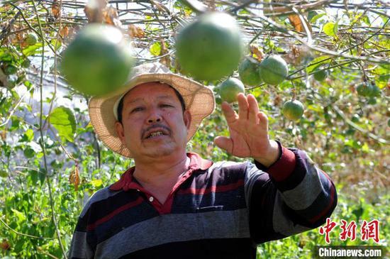 """""""百香果不仅带来经济收入,更带来幸福。""""依靠百香果产业扶持脱贫的村民吴万芳道出切身感受。 张金川 摄"""
