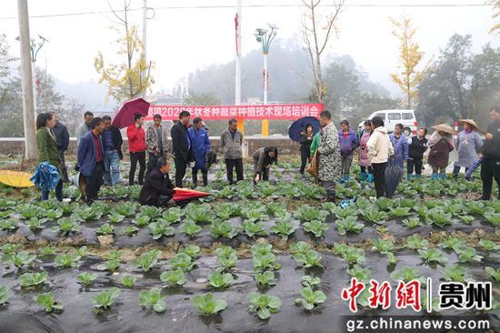 客楼镇2020年秋冬种蔬菜种植技术培训现场
