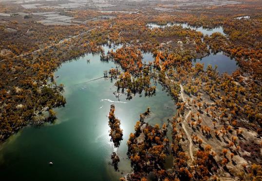 阿克苏拥有世界面积最大的胡杨林区。刘新 摄