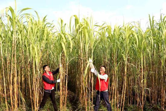 队员们爱心助农。  义乌市烟草专卖局供图