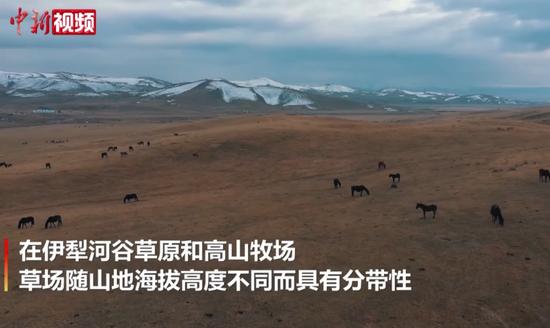 实拍初冬新疆昭苏高原:如油画一般