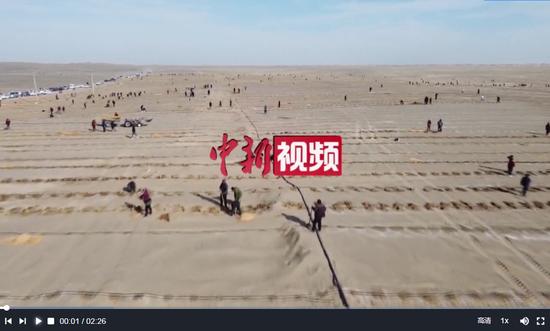 新疆且末县:沙漠边缘千人植树队栽树忙
