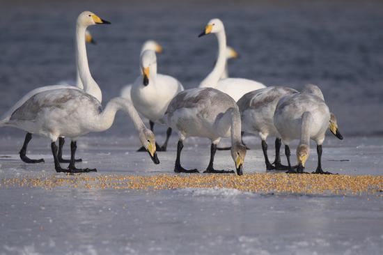 21团开都河流域野生动物保护志愿服务项目斩获全国赛银奖