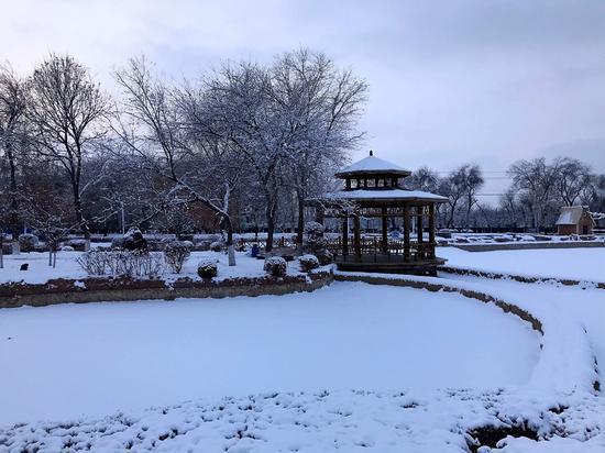 首场大雪落石城  琼枝玉叶风景美