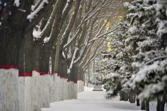 """雪为令!固原最大降雪7.1毫米,各部门清扫""""门前雪"""""""