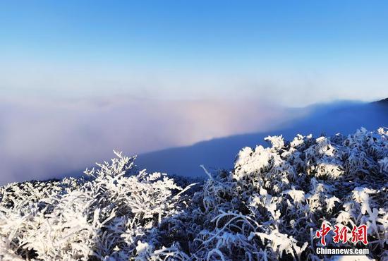 梵净山形成云雾翻滚的云海景观。 李鹤 摄
