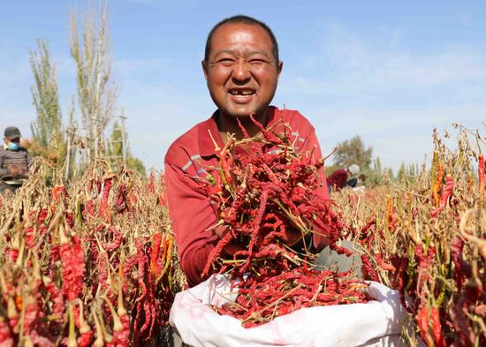 """喀什市各乡镇发展特色农产业 沃土种下""""辣椒梦"""""""