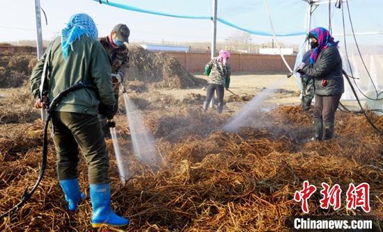 新疆阿勒泰地区哈巴河县萨尔塔木乡库尔米希村内,中药材加工厂,村民在加工厂工作。 热依扎 摄
