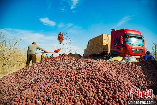 红枣成富民增收主导产业 新疆洛浦农民过上红火日子