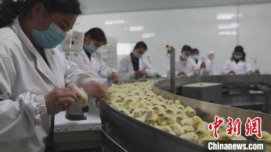 """新疆南部崛起富民产业群 特色养殖""""养""""出幸福生活"""