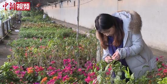 """新疆:""""科技賦能""""讓農戶冬天過得""""有聲有色"""""""