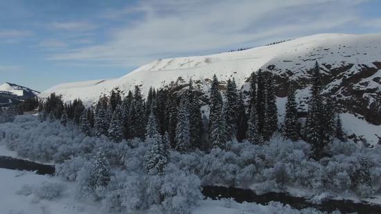 新疆巴州巩乃斯国家森林公园一场大雪后,出现了童话般的神奇景色。