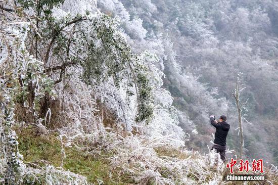 12月19日,受多日强冷空气影响,贵州省贵阳市白云区牛场布依族乡云雾山地势较高地带出现雾凇景象,一眼望去冰天雪地,漫山遍野铺满冰晶,景色宜人,美不胜收。图为游客在用手机拍摄雾凇美景。 乔啟明 摄