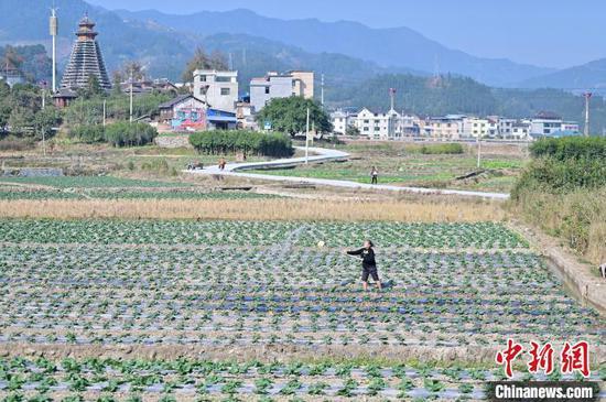 从江县贯洞镇的村民在菜地里给蔬菜浇水。 吴德军 摄