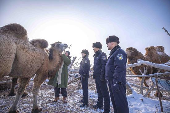"""牧主边抚摸骆驼边对骆驼说,如果没有这些民警我可找不着""""你们""""了。"""