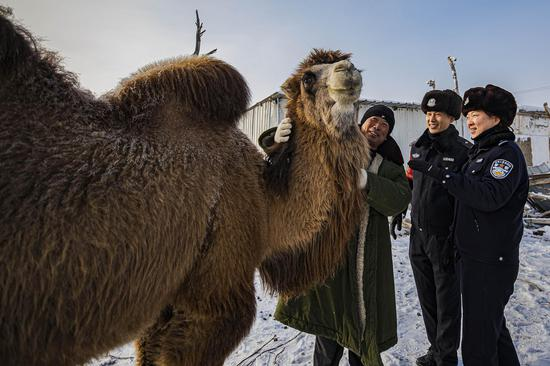 抚摸着走失找回的骆驼牧主脸上露出欣慰的笑容。