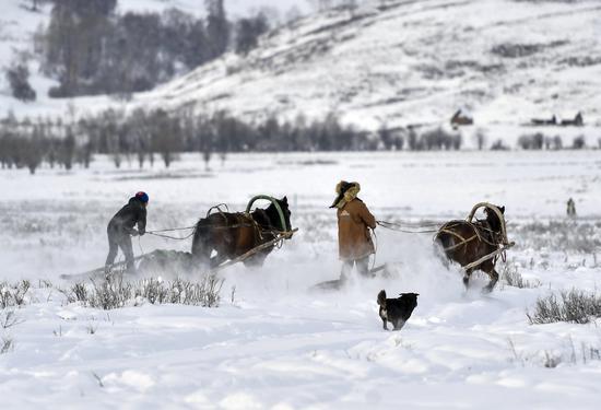 12月22日,新疆阿勒泰地区喀纳斯景区禾木乡举办喀纳斯冰雪嘉年华暨吉克普林滑雪场首滑仪式,当地牧民驾驭马拉爬犁驰骋在茫茫雪原中,为游客表演当地特色民俗。中新社记者 刘新 摄