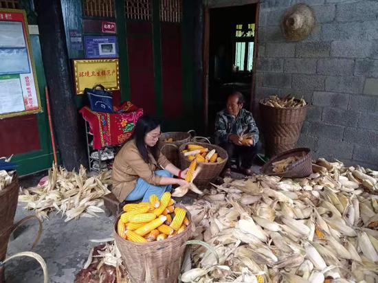 帮助群众收玉米