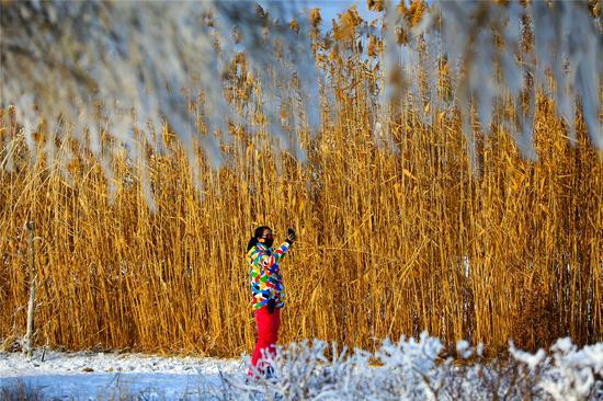 博湖縣:冬季博斯騰湖蘆葦蕩美出天際