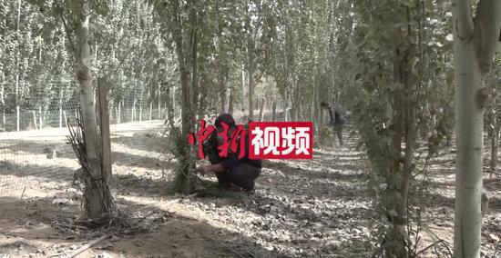 """新疆边城小县:前有林后有果 边地沙漠变""""金窝"""""""