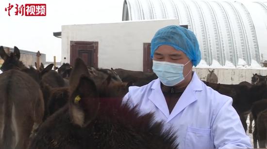 """新疆锡伯族""""驴倌"""":从""""一窍不通""""到技术能手"""