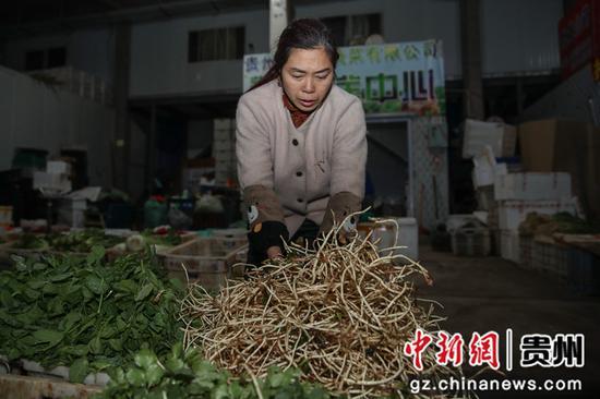 圖為一名批發商在整理當日的新鮮蔬菜。 瞿宏倫 攝