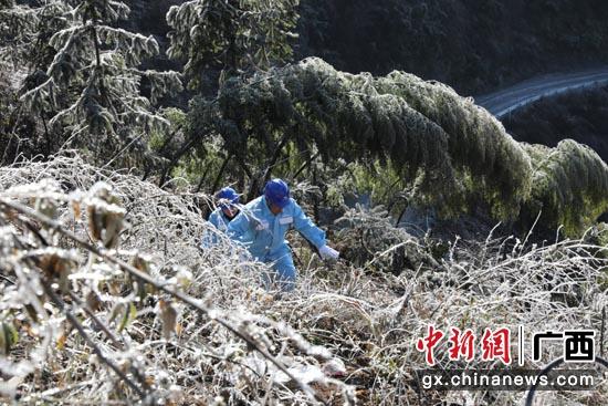 桂林资源高寒地带现雾凇 山区老黎民用电无忧