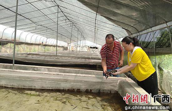 水蛭养殖加工龙头企业广西三兴堂生物科技有限公司科学养殖水蛭。李华毅 摄