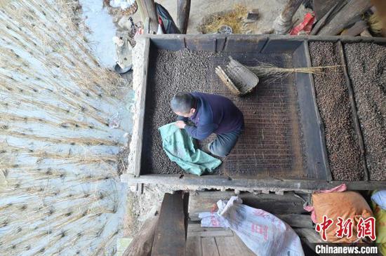 图为一名侗族榨油师傅在撮烘烤好的茶籽。 吴德军 摄