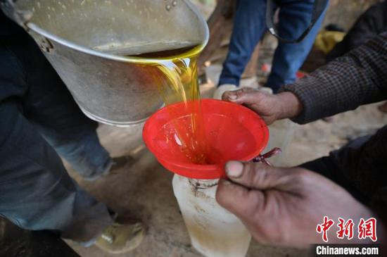 图为榨油师傅在倒出压榨好的茶油。 吴德军 摄