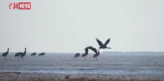 贵州威宁草海迎来十万候鸟越冬
