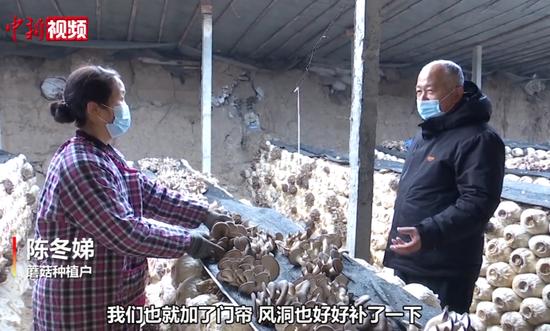 新疆:室外冰天雪地 室内蘑菇长势喜人