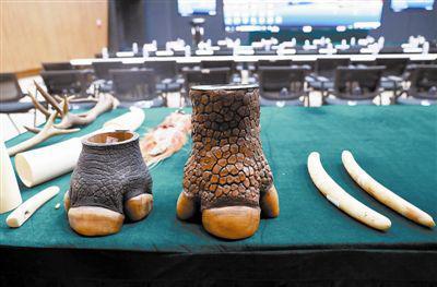 天津海关严厉打击濒危野生动植物及其制品走私