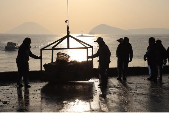 从海上捕获的渔获物,一筐筐吊到码头上。江文辉 摄