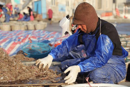 渔民分拣海鲜。江文辉 摄