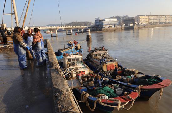 一艘艘帆张网船满载着渔获物停靠在码头。江文辉 摄