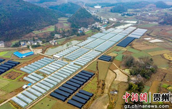 乐透世界省毕节市黔西县锦星镇白泥社区生态草莓基地(无人机照片)。