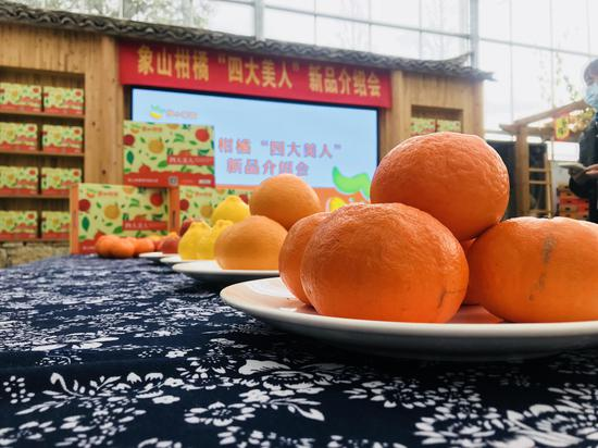 """""""四大美人""""系列柑橘。 陈光曙 摄"""