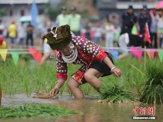 贵州省兴义市义龙试验区楼纳村,布依族民众欢庆一年一度的开秧节。张晖 摄
