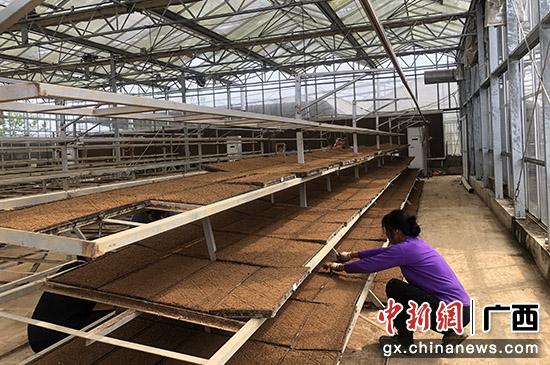 桂林兴安县农业机械社会化服务助力乡村振兴