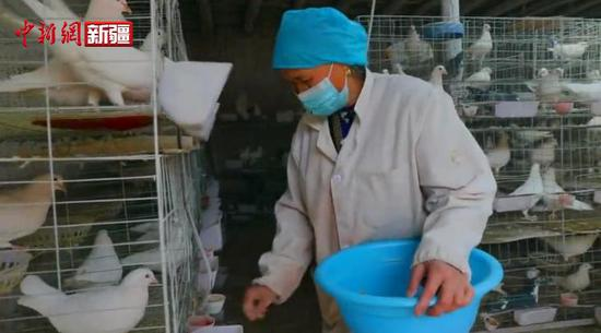 新疆喀什农民养鸽养出幸福新生活