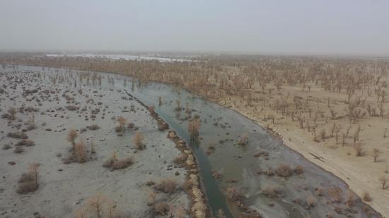新疆巴州:孔雀河中下游实施第六次生态输水