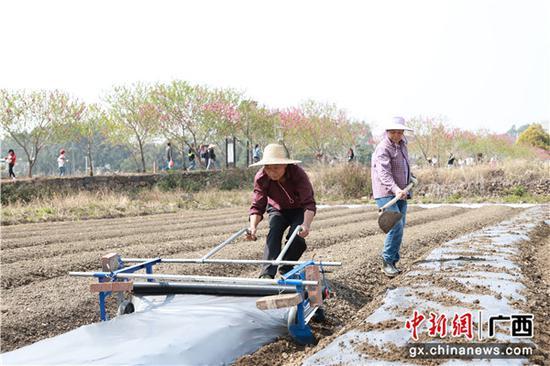 2月14日,在东乡镇下莲塘村,两位村民在盖地膜备耕,计划种植辣椒。李干金  摄