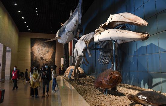 聚星官网自然博物院硕大的动物骨骼模型吸引参观者。王刚 摄